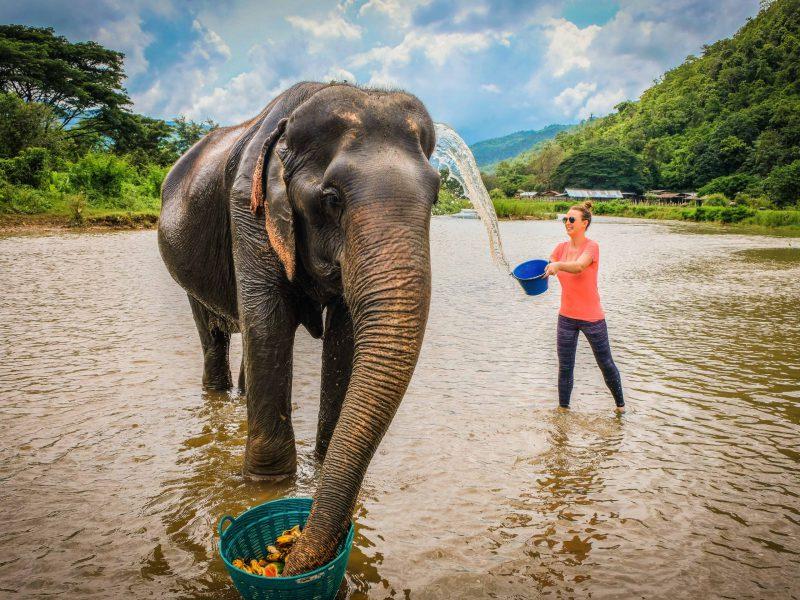 4.Elephant Nature Park-ไร่ชาลุงเดช