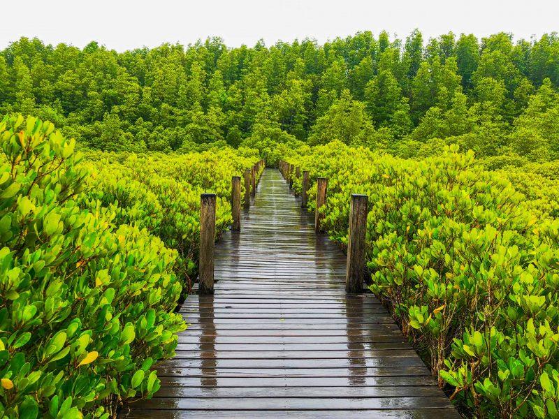 46.เส้นทางเดินศึกษาธรรมชาติทุ่งโปรงทอง-ทุ่งโปรงทอง