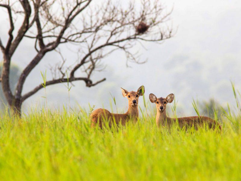 53.เขตรักษาพันธุ์สัตว์ป่าภูเขียว-อุทยานแห่งชาติป่าหินงาม