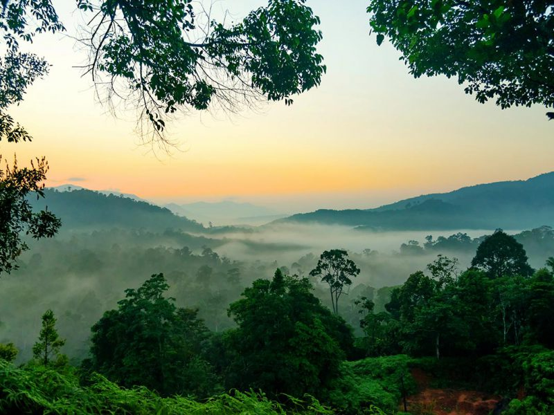 ป่าฮาลาบา